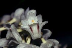 Очень малый цветок орхидеи стоковые фото