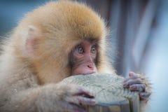 Милая японская обезьяна снежка Стоковая Фотография
