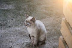Очень милый и малый кот с голубыми глазами Стоковое фото RF