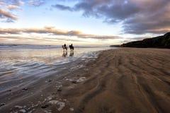 Очень романтичный взгляд пляжа с лошадями стоковая фотография rf