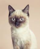 Очень серьезный кот Стоковое Изображение