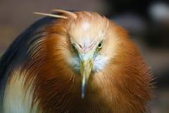 Очень сердитая птица стоковое изображение