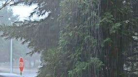 Очень сильный дождь лета формируя потоки воды на дороге видеоматериал