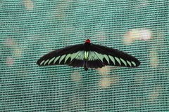 Очень сладостная бабочка Стоковая Фотография