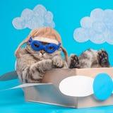 Очень смешной пилот кота самолета со стеклами и шляпой пилота сидя на самолете, на фоне облаков Концепция стоковая фотография rf