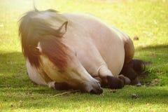 Очень сонный Стоковое фото RF