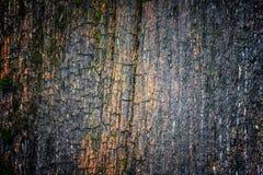 Очень старая выдержанная деревенская деревянная текстура с мхом и отказами на t Стоковая Фотография