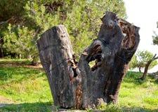 Очень старое дерево на зеленой лужайке Стоковые Изображения