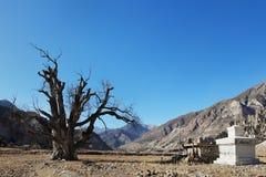 Очень старое одиночное дерево в долине горы и буддийском stupa стоковые изображения rf