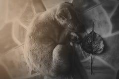 Очень унылая собака Унылый терьер границы ухищренная собака Собака больна и скучает по его предпринимателю Терьеру нужно уравнове Стоковые Фото