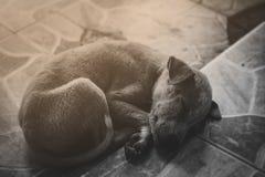 Очень унылая собака Унылый терьер границы ухищренная собака Собака больна и скучает по его предпринимателю Терьеру нужно уравнове Стоковое фото RF