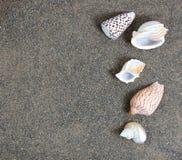 Очистите песок пляжа с seashells Стоковое фото RF