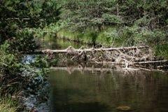 Очистите реку горы и высушенное старое дерево Стоковое Фото