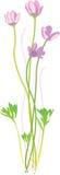 очистьте вектор иллюстрации цветка Стоковые Изображения RF