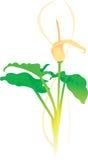 очистьте вектор иллюстрации цветка Стоковая Фотография