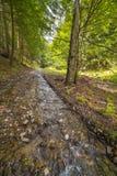 очистьте воду потока принципиальной схемы свежую Стоковое Фото