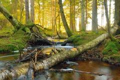 очистьте воду потока принципиальной схемы свежую Стоковое Изображение