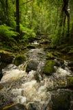 очистьте воду потока принципиальной схемы свежую стоковое фото rf