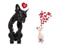 очистьте влюбленность 2 потехи собак конструкции Стоковая Фотография RF
