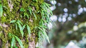 очистьте зеленый цвет стоковое изображение