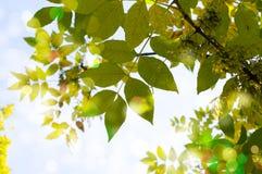 очистьте листья зеленого цвета фокуса отмелые стоковые фотографии rf