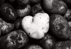 очистьте сформированную картошку сердца Стоковые Изображения
