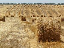 очищать вверх пшеницу стоковое изображение rf