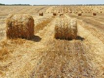 очищать вверх пшеницу стоковые изображения rf