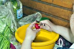 Очищение редиски для того чтобы подготовить салат стоковое изображение rf