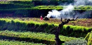 Очищение сельскохозяйственного угодья avattavada, Кералы стоковое фото rf