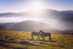 2 лошади в ласкать горы стоковые изображения