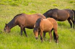3 лошади в конце-вверх выгона Стоковое Изображение