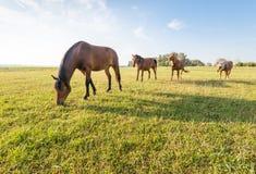 4 лошади в последовательности Стоковые Изображения