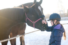 2 лошади в paddock levada на зиме Стоковые Фото