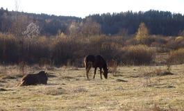 2 лошади на прогулке Стоковое Изображение RF