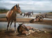 лошади отдыхая в воде стоковые фотографии rf