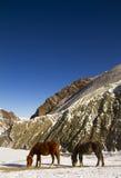 2 лошади пася в Гималаях, Индии Стоковая Фотография
