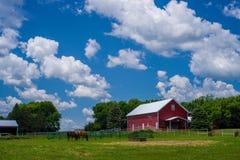 2 лошади пася, южная Минесота Стоковая Фотография