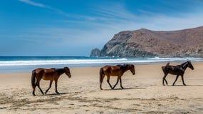 лошади пляжа одичалые Стоковые Фото
