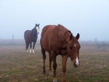 2 лошади стоя на Paddock Стоковое Фото