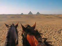 2 лошади с пирамидами Гизы Стоковые Фотографии RF
