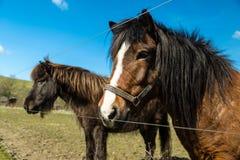 лошади фермы 2 Стоковое Изображение RF