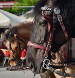 2 лошади Стоковая Фотография