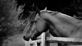 2 лошади Стоковое фото RF