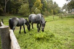 2 лошади Стоковые Изображения