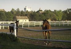 лошади 2 Стоковое Изображение