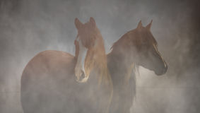 лошади 2 Стоковые Изображения RF