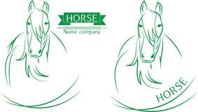 лошад-на-бел-предпосылка Стоковое Изображение RF