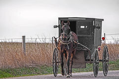 лошадь багги amish стоковая фотография rf