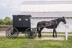 лошадь багги amish стоковое фото